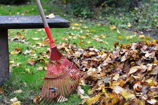 Can I Leave Leaves On My Lawn Without Picking Them