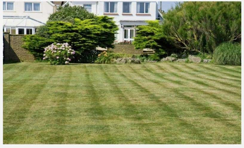 (image of brown stripe syndrome on a lawn)